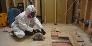 Water Damage Restoration Mold Removal Process